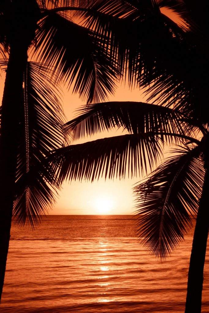 sunset with palm trees on beach